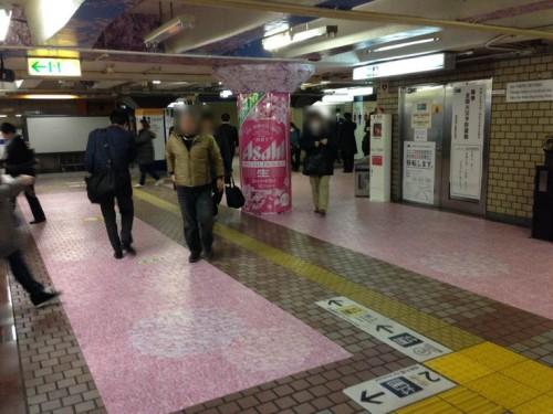 ueno_sakura4